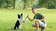 """Výcvik psů: """"Moderní etický trénink"""" Roberta Zlochy"""